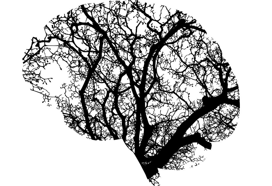 Genetische invloed op hersenschors gelinkt aan mentale aandoeningen