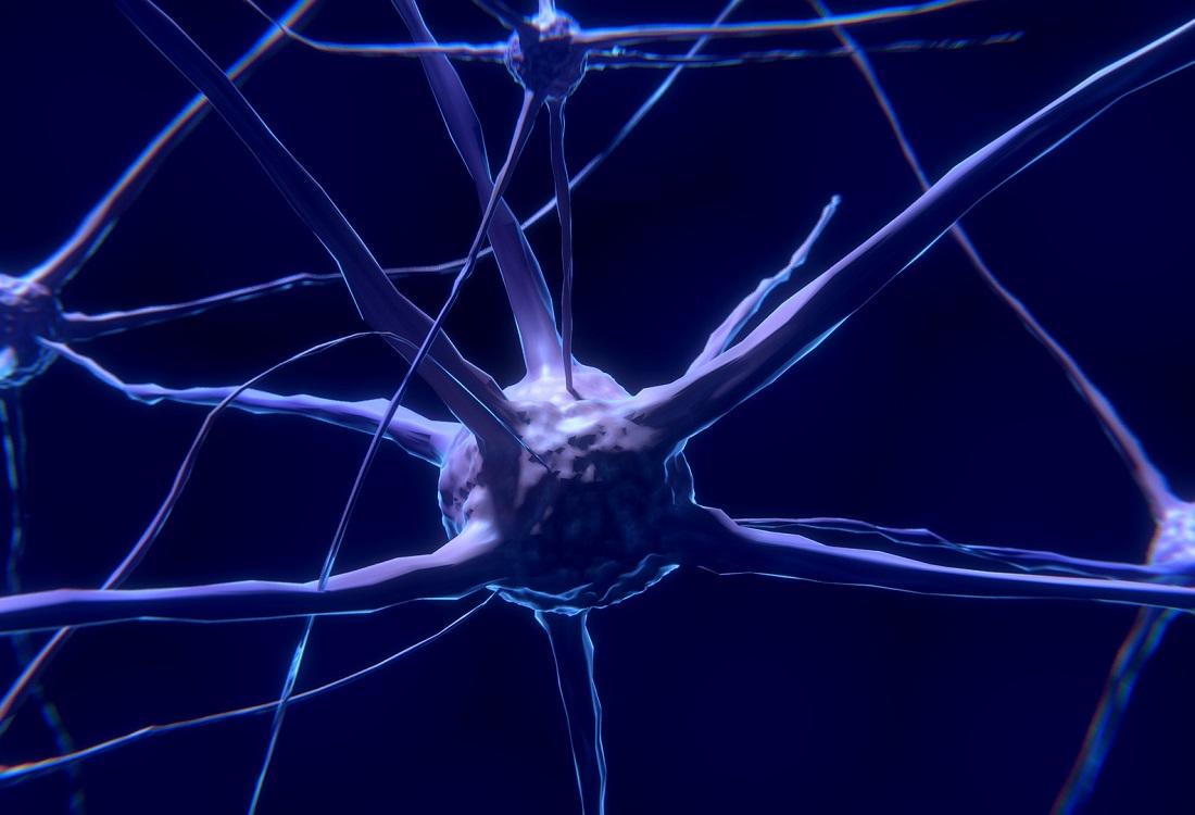 Bijzondere archeologische vondst: neuronen uit de oudheid