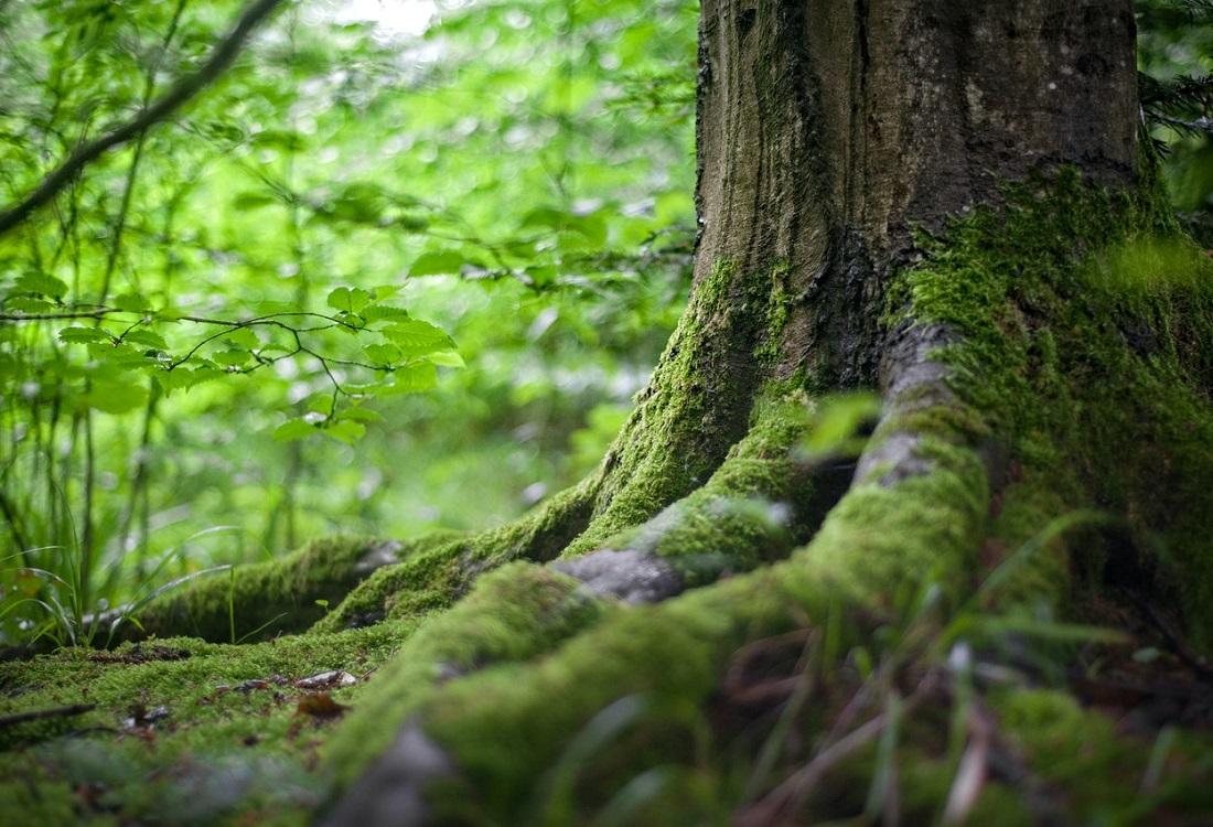 WHO-rapport: groenvoorziening belangrijk voor mentaal welzijn